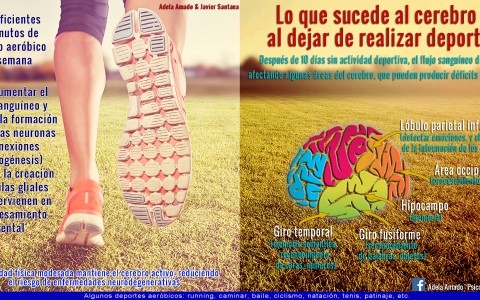 cerebro_deporte_adela_amado